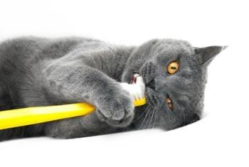 Стоматологические услуги для котов и кошек